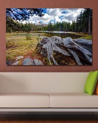 WPJXS7PR Photography Forest Landscape Print Art